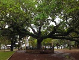 Oaks by the Bay Park