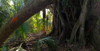 Rafael Sanchez Trail