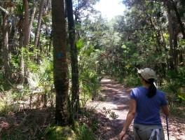 Hiking Tosohatchee WMA – Big Blue Cypress Mound