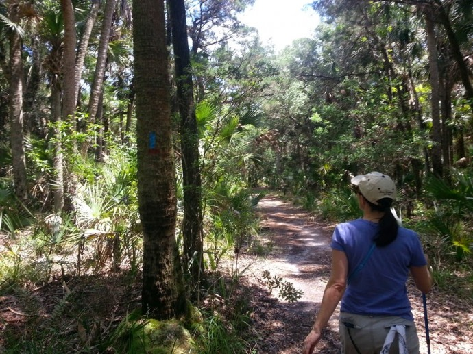 Trail through the woods at Tosohatchee