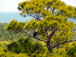 Eagle Eye View