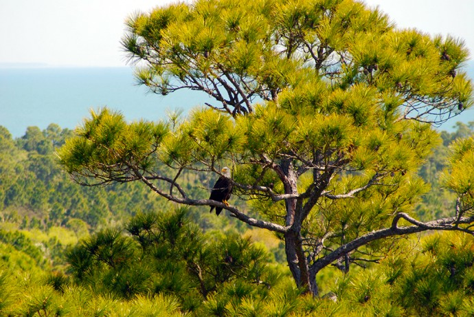 Face-to-face with an eagle from the top of the Cape San Blas Lighthouse