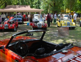 Cars in the Garden