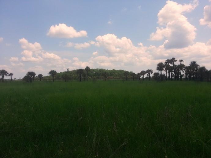 Clouds over Big Blue Cypress Mound