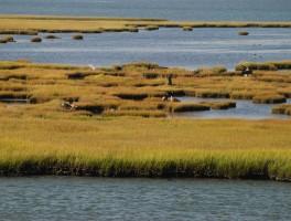 Finding Atlantic City's True Nature