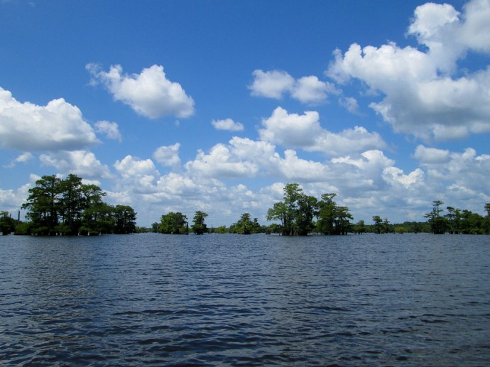 Open water and clusters of cypress on the Lakes