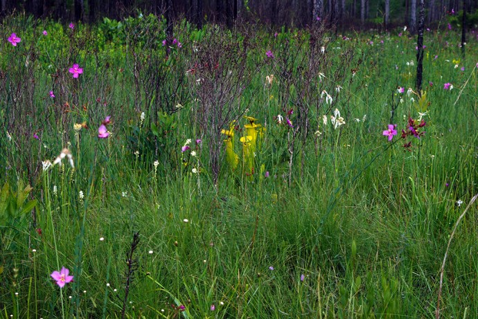 Summer wildflowers in the Savannas