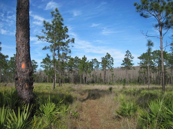 An orange blaze along the Florida Trail in Prairie Lakes