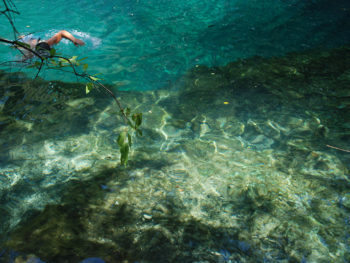 Algae growth on rocks at Manatee Springs