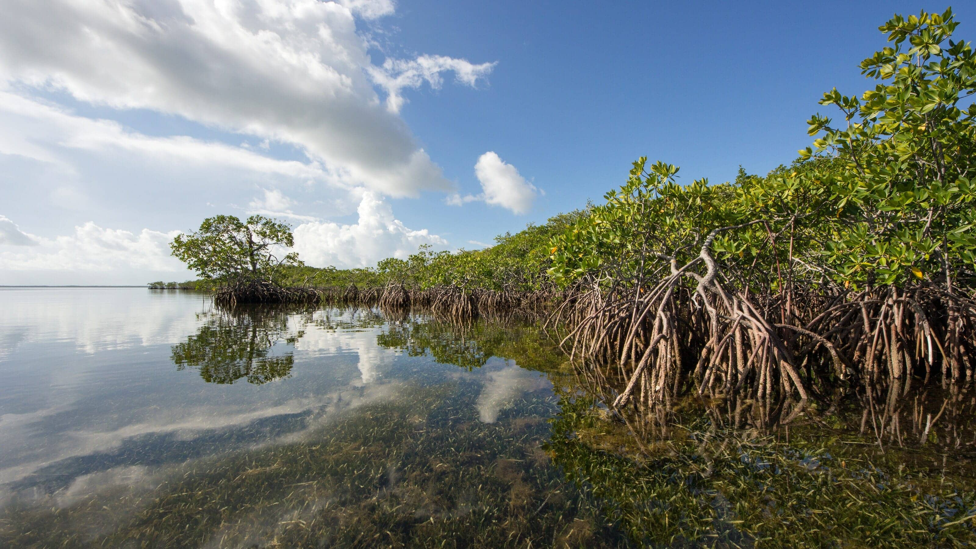 Mangroves in Biscayne Bay