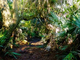 Halpatiokee Nature Trail