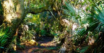 Halpatiokee Nature Trail (Lori Burris)