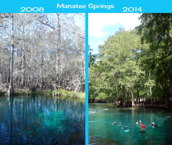 Changes to Manatee Springs