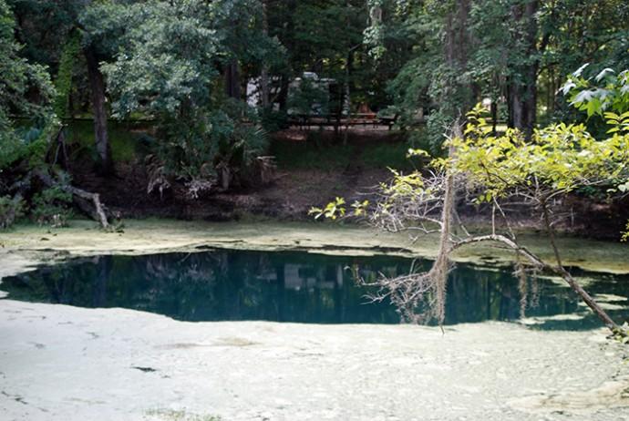 Catfish Hotel Sink at Manatee Springs