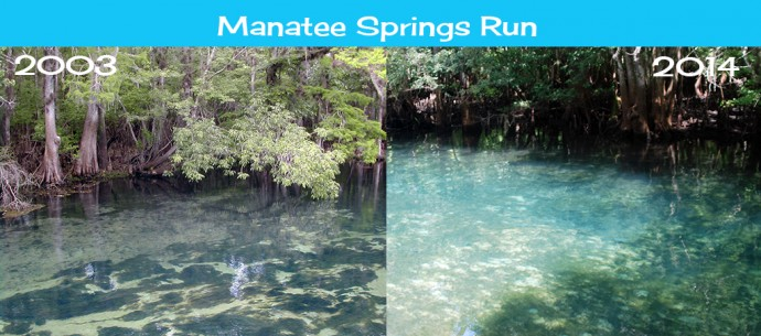 Changes in Manatee Springs Run