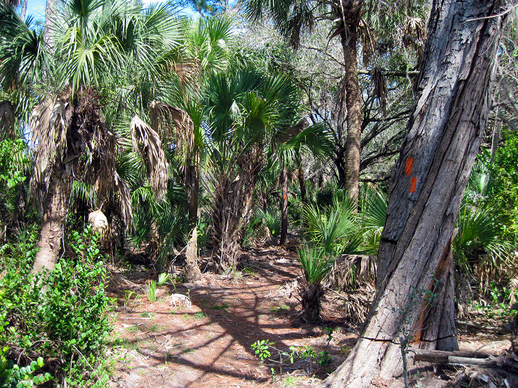 Florida Trail on the Ocean-to-Lake Greenway