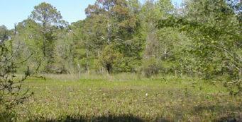 Plum Orchard Pond