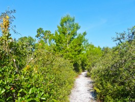 Fighting bulldozers in a Florida State Park