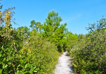 Scrub habitat on the Halpatiokee Nature Trail (Lori Burris)