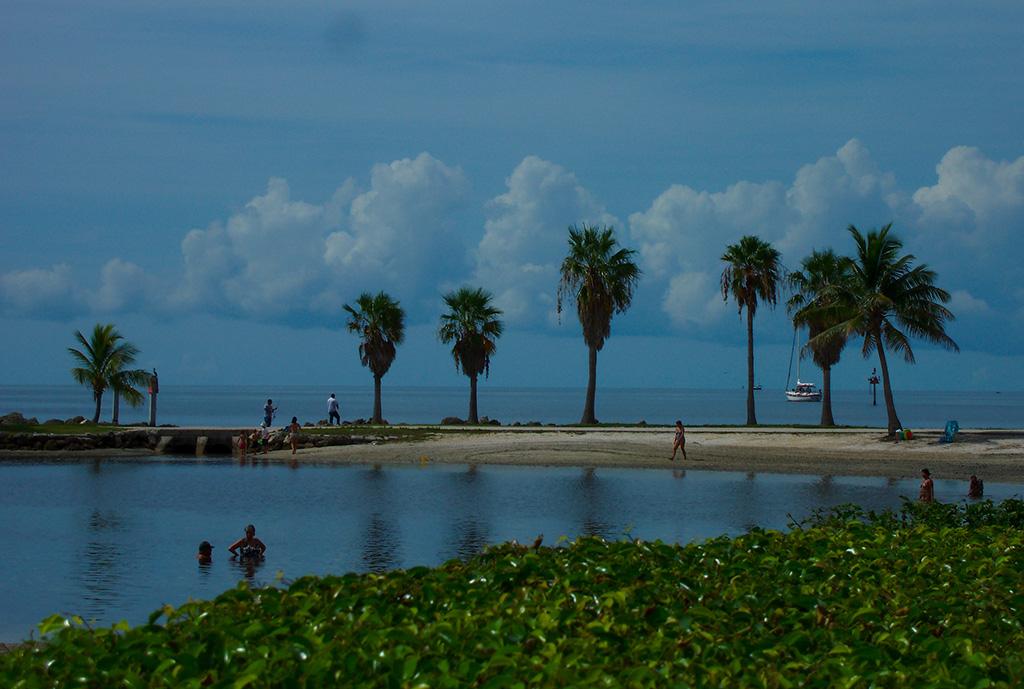 Matheson Hammock Park Florida Hikes