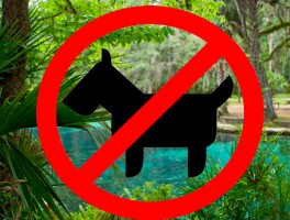 Ocala National Forest dog policy