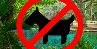 no dogs Juniper Springs