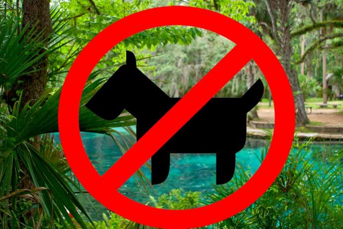 no dogs at Juniper Springs