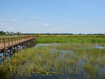 Wetlands at Twin Oaks Conservation Area