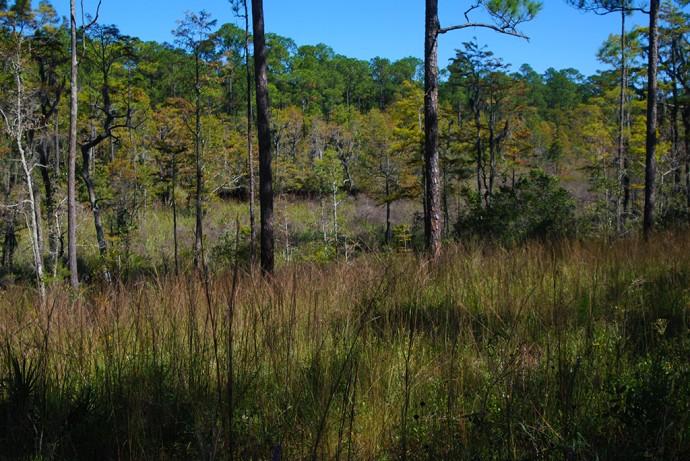 Bayou along Dees Nature Trail