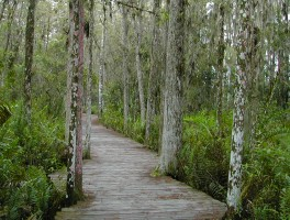 Loxahatchee NWR Cypress Trail