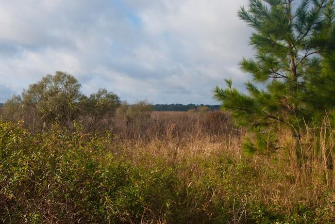 Edge of Tuscawilla Prairie