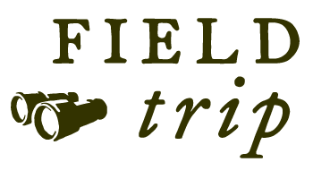 Field Trip from Google