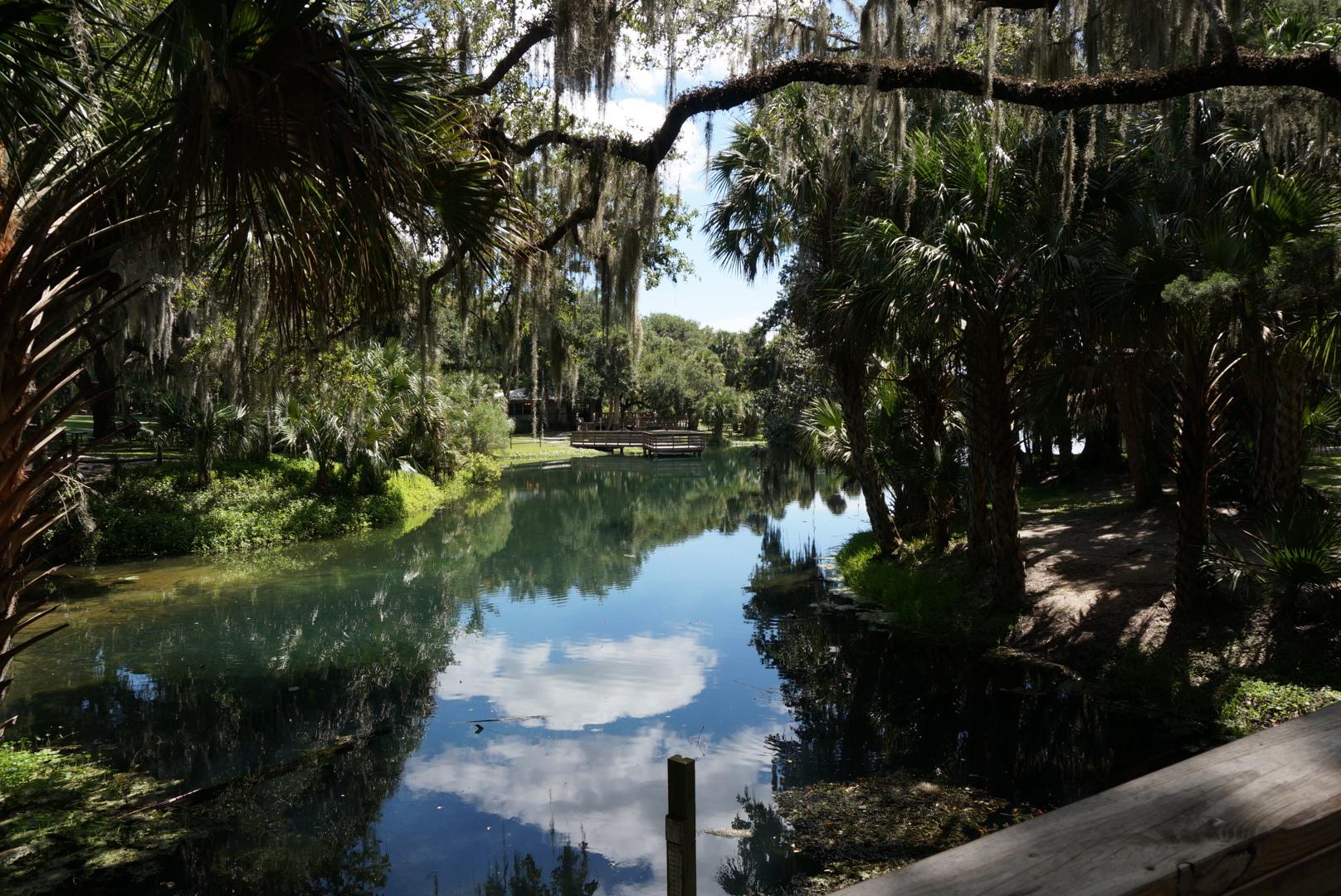 Focused On Gemini Springs Florida Hikes