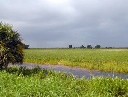 Summer storm on the marshes at Loxahatchee National Wildlife Refuge