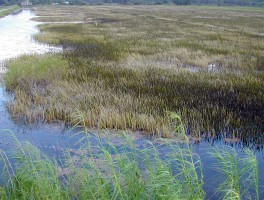 Loxahatchee NWR Marsh Trail
