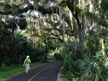 Oak hammock on paved trail