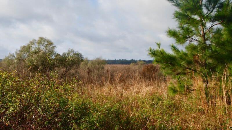 Tuscawilla Prairie
