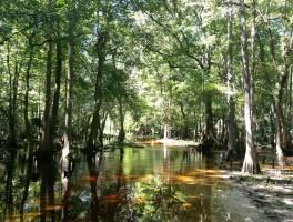 Hiking Hal Scott Preserve White Trail