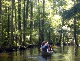 Paddling Shingle Creek