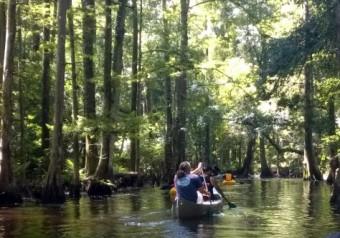 Canoeing Shingle Creek