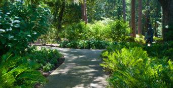 Along the Azalea Trail headed towards the Labyrinth