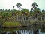 California Swamp in Dixie County