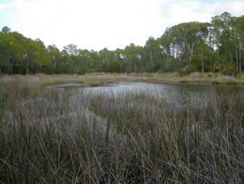 Lower Suwannee NWR