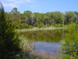Graham Swamp Preserve