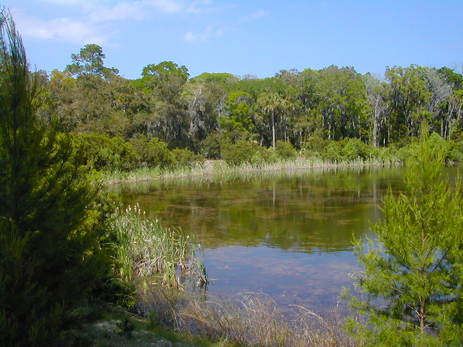 The largest of the ponds at Graham Swamp Preserve