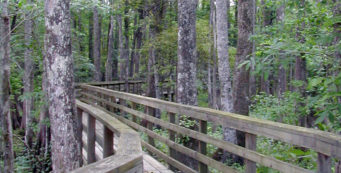 River Trail, Lower Suwannee NWR