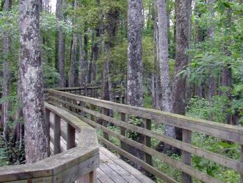 River Trail, Lower Suwannee NWR