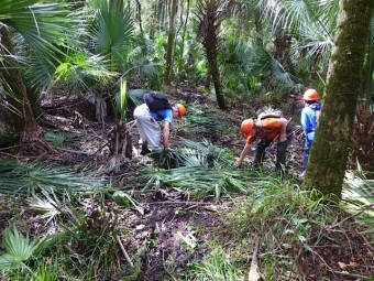 After the mower had gone out & back, the palm fronds covering the mud were removed from the trail