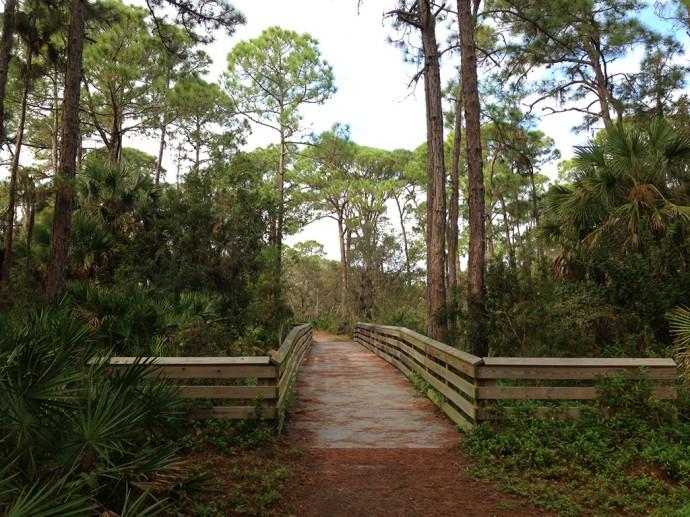 Boardwalk in the pine flatwoods