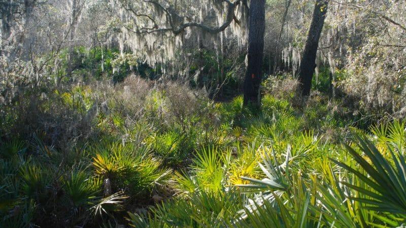 Florida Trail Big Shoals section